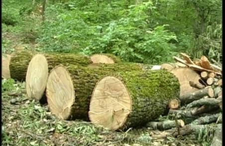 На Харківщині з потурання місцевої ради вирубують вікові ліси