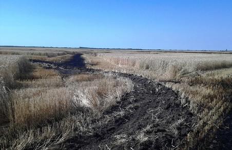 На Житомирщині згоріло 5 гектарів пшениці