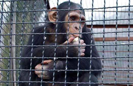 У зоопарку Харкова облаштують «Планету мавп»