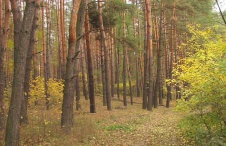 Готель замість лісу: черговий земельний скандал під Харковом