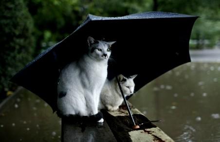Впадуть дощі. Цього тижня Україну очікує дощова та холодна погода