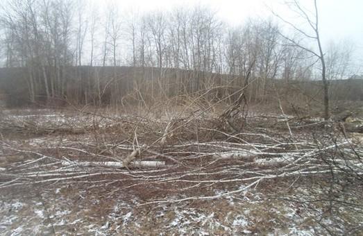 У Вовчанському лісгоспі горе-лісоруб зрубав рідкісні породи дерев (Фото)