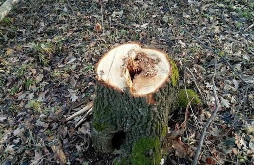 В Первомайську вирубали лісу на 500 тис. грн. (ФОТО)