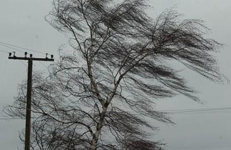 В Харкові  завтра - сильний вітер