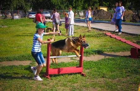 У Харкові й далі будуватимуть собачі майданчики