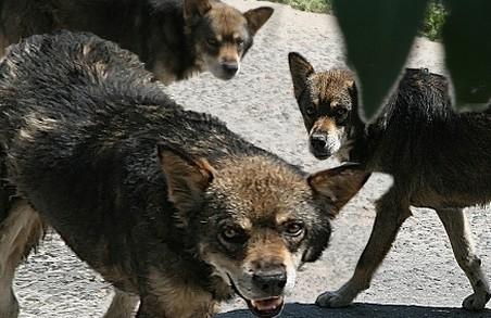 Собака покусав господарку та її гостей