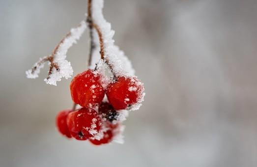 Зимові канікули цього року навпрочуд вдалися/ Фоторепортаж