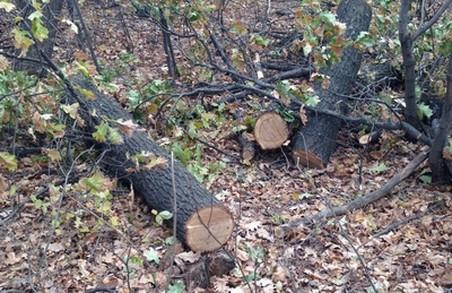 Справу про вирубку лісу на 400 тис.грн. направлено до суду