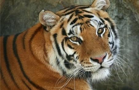 Харківський зоопарк поповнився новим звірем