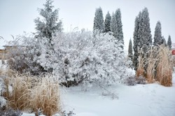 Різдво подарувало харків'янам справжню казку/ Фоторепортаж