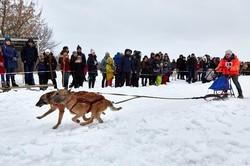 Winter Dog Fest. Під Харковом пройшли гонки північних їздових собак в упряжках/ Фоторепортаж