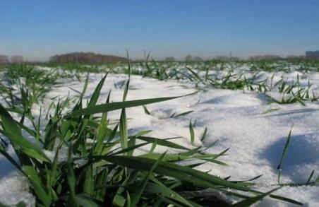 Озимі на Харківщині зійшли на 92% площ