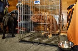 Собаки в Харкові: за «Зимовий кубок-2017» змагаються кращі / ФОТОРЕПОРТАЖ