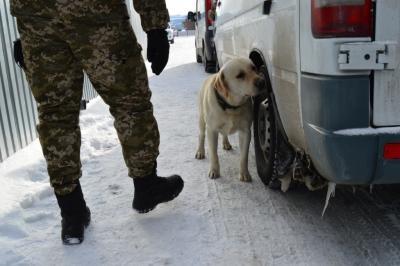 Прикордонний собака винюхав опіум в ліках