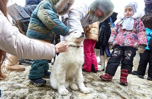 Winter Fest-2: селфі з індіанцями і покатушки на собаках