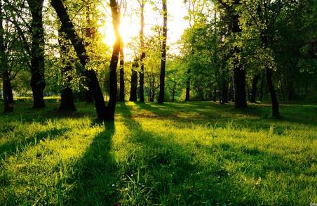 Штраф за засмічення лісів збільшили до максимальних 850 грн