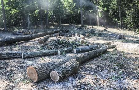Лісоруб із Харківщини відшкодує 32 тисячі гривнів