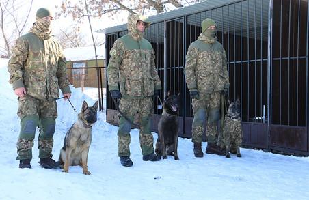 Нацгвардія показала собачий спецназ (ФОТО, ВІДЕО)
