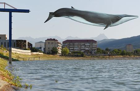 У Харкові взялися боротися із «синіми китами»