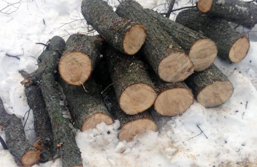 Нелегальні лісоруби на Харківщині все частіше дають про себе знати