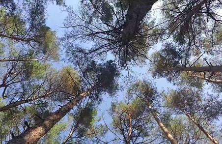 Лісгосп проґавив незаконну вирубку дерев на 900 тис. грн.