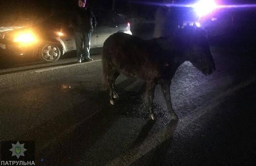 Потрійне ДТП з поні на Білгородському шосе обійшлося без жертв/ Фото