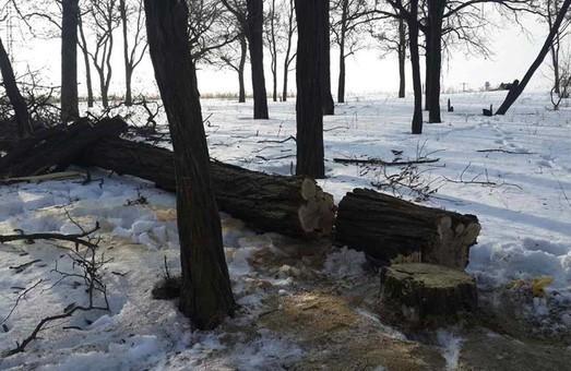 """У Гомільшанських лісах затримані """"вільні"""" лісоруби"""