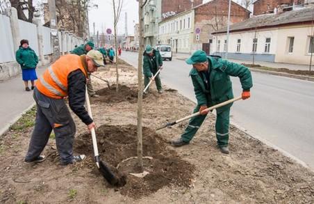 Чоботарську засадили липами/ Фото