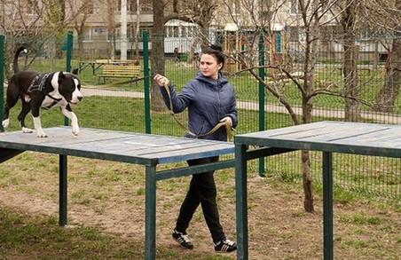 У Харкові встановлять п'ять нових собачих майданчиків