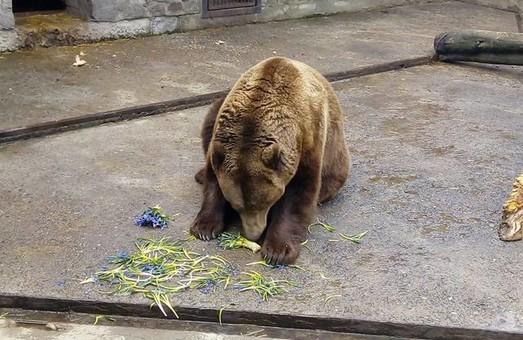 Ведмеді з харківського зоопарку з'їли рідкісні рослини