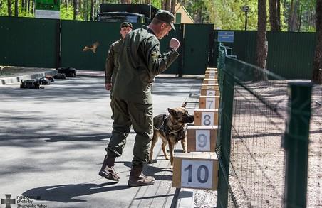Військові собаки до Євробачення 2017 готові!/ Фото