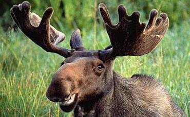 Українським мисливцям заборонять полювання на останній трофей