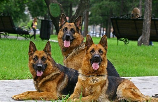 Поліція очікує улітку сплеску квартирних крадіжок і радить завести собаку