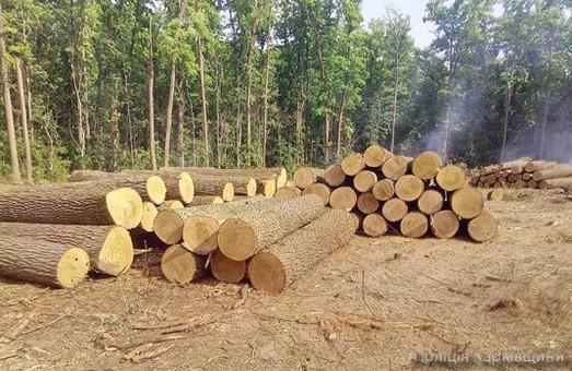 Затримано велику партію нелегального лісу