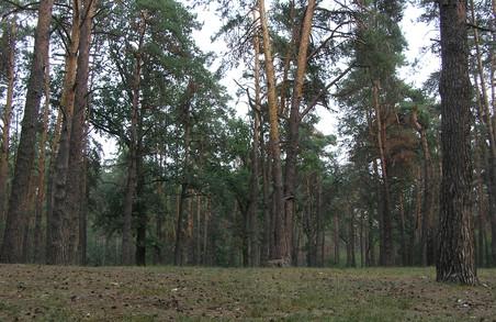 """ДП """"Зміївське лісове господарство"""" відшкодує збитки за незаконну порубку лісу"""