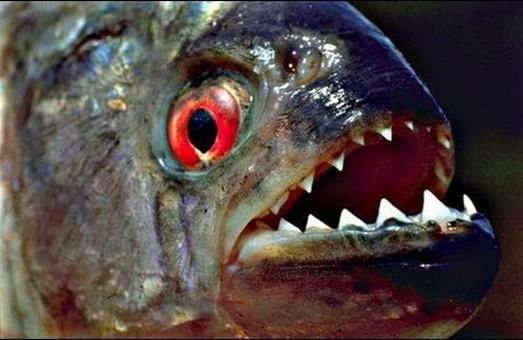 Риба вбила вісім українців/ Офційно