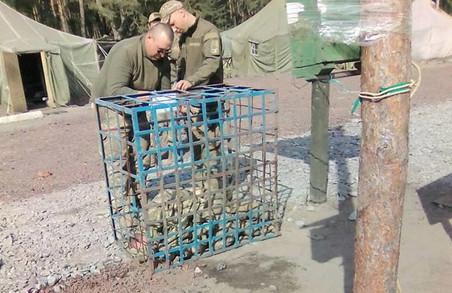 На Харківщині в 54 бригаді ВСУ солдати збунтувалися проти несправедливого ставлення офіцерів / ДОКУМЕНТ