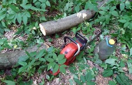 """""""Вільного лісоруба"""" спіймали в Гомільшанських лісах"""
