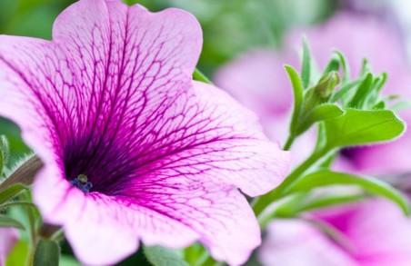 На Університетській гірці висадять красиву квіткову композицію з 20 тисяч квітів