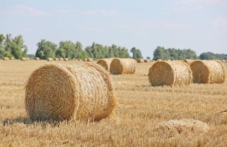 Врожайність на Харківщині б`є рекорди: аграрії зібрали 2 мільйони тонн зерна