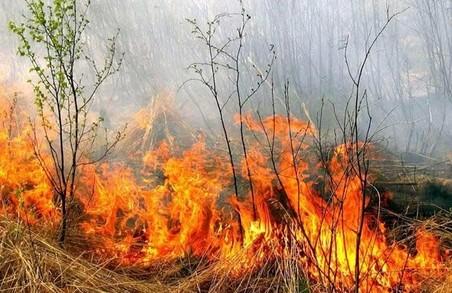 Рятувальниками було ліквідовано 28 пожеж в екосистемах