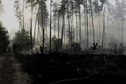 Харківськими рятувальниками було ліквідовано 34 пожежі в екосистемах