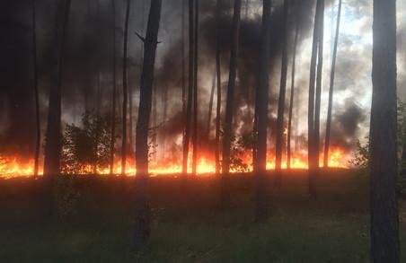 На Харківщині велика пожежа/ Доповнено 9.12
