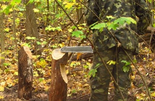 """""""Вільний лісоруб"""" нарубав деревини на 20 тис.грн. і кримінальну статтю"""