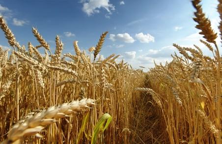 Україна здатна за рік нагодувати до 500 мільйонів людей – В. Звєрєв