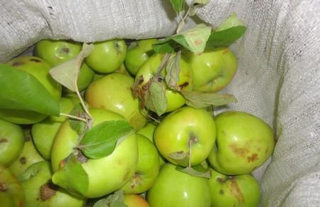Селянку викрили на крадіжці яблук