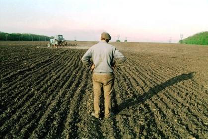 У фермера відібрали 40 га орендованих земель