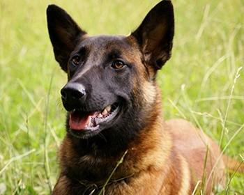 Розшукові собаки Харківщини стали найкращими собаками в Україні
