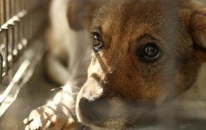 В Україні можуть з'явитися зоокопи