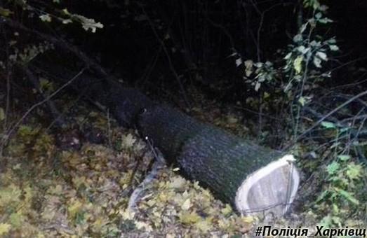 На селі спіймали лісового крадія